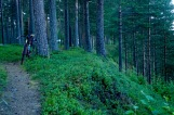 Singletrack along the pines