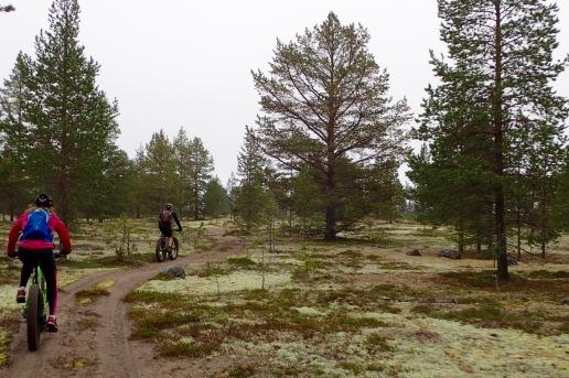 The moss gardens of Sandön