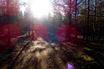 Lovely autumn light along the forest trails