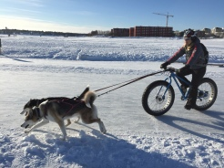 Orurorboros fat biking the husky way.